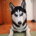 Snowdog Honam