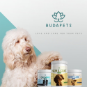 BudaPets brand awareness