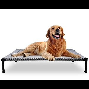 Elevated Dog Bed Campaign